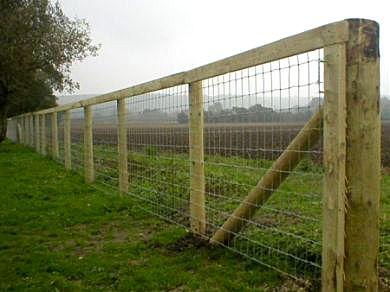 Cattle fences