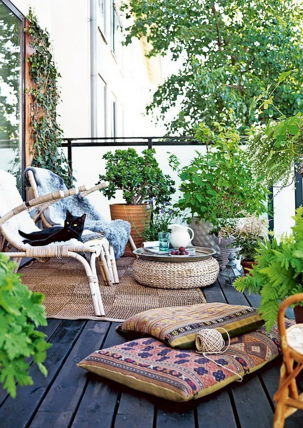 Plants for terraces or balconies