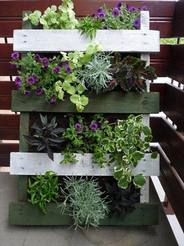Vertical garden with wooden pallets