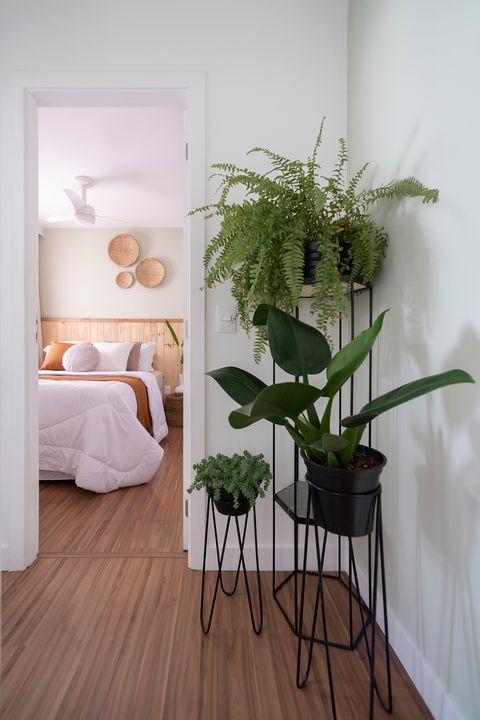 entrance to the bedroom decorated with black plants and tall pots