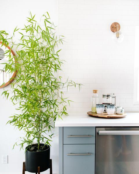 Open kitchen designed by Maple & Plum