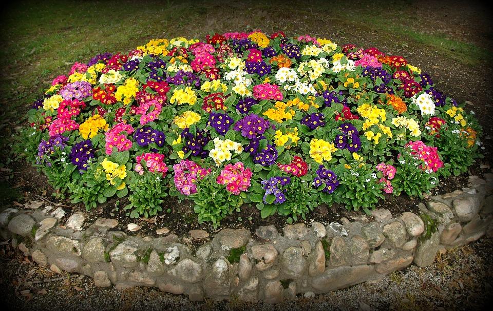 primroses-flowerbed