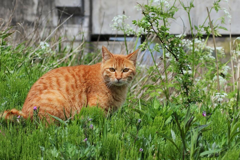 Cat-repellent-vegetable-plants