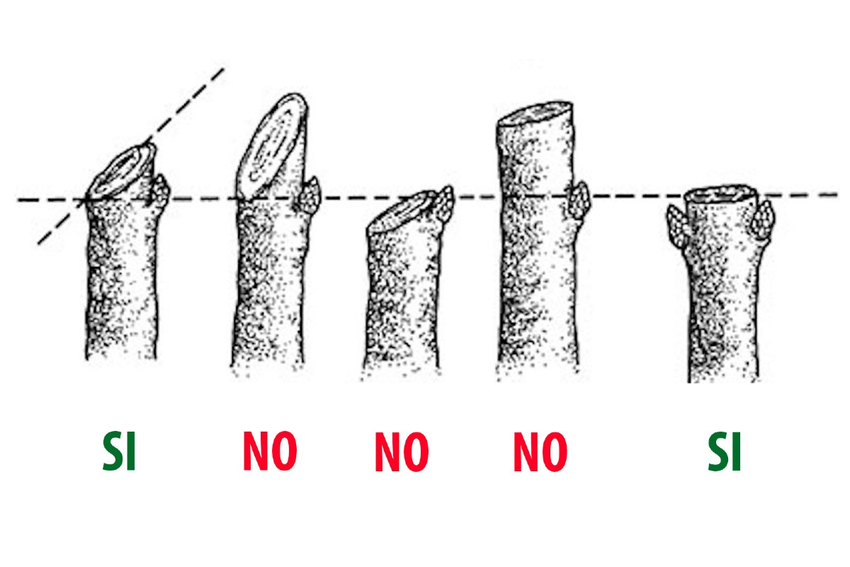 Hedge pruning techniques 2