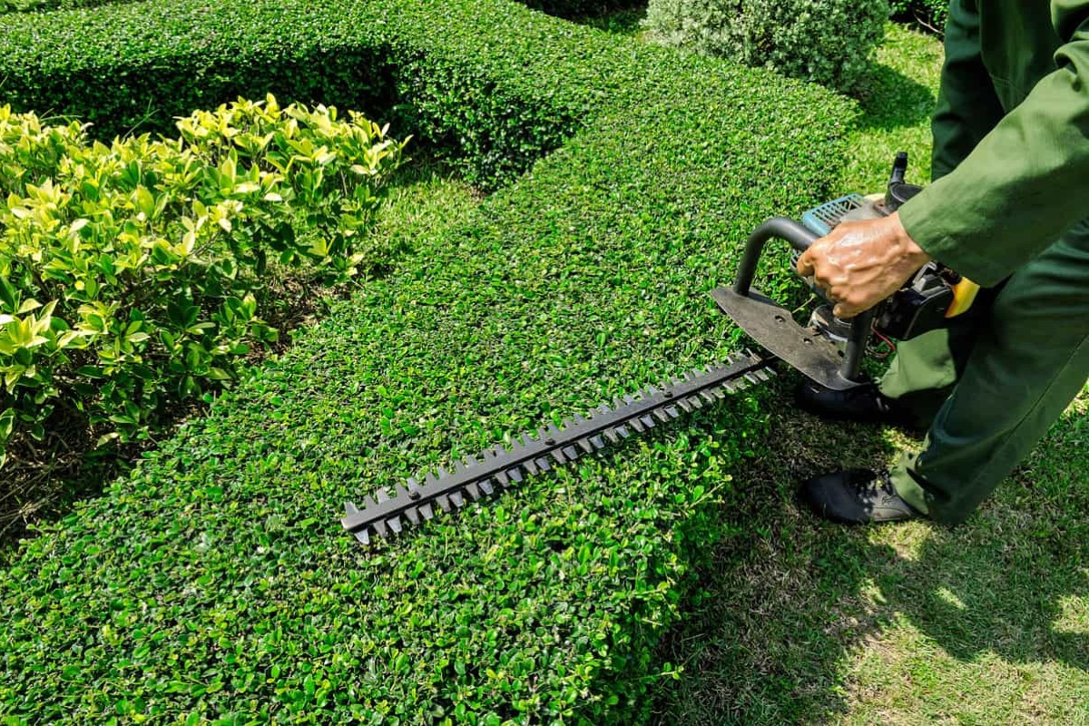 Hedge pruning techniques 4