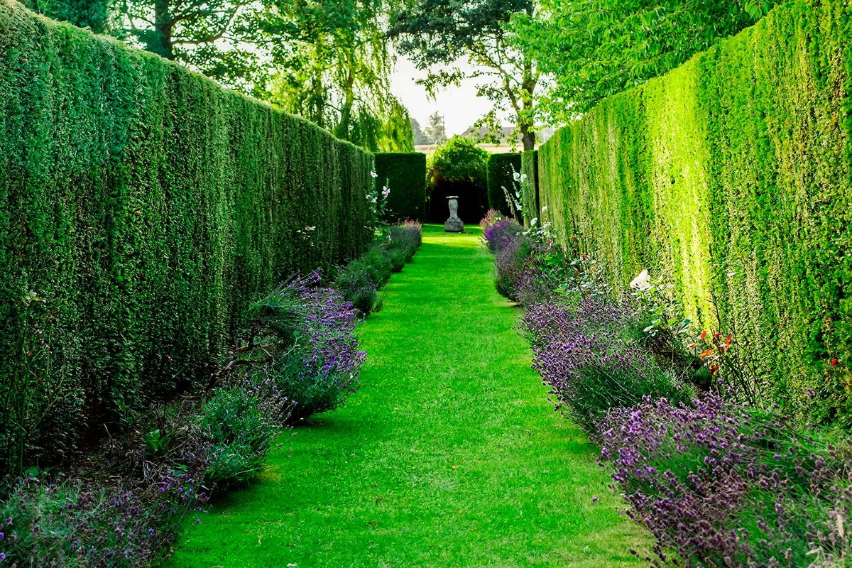 How to choose the right hedge for your garden 3