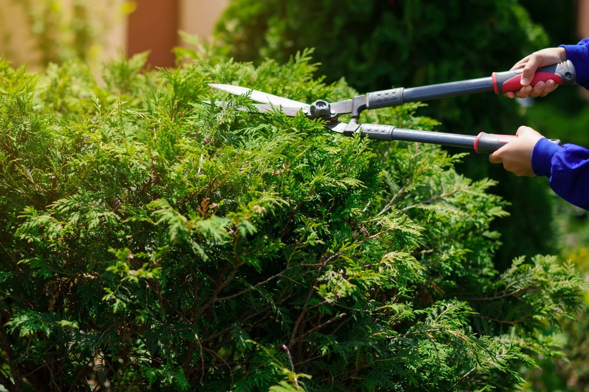 How to choose the right hedge for your garden 2