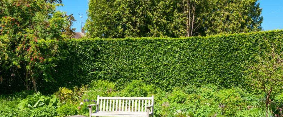 Come scegliere la siepe adatta per il tuo giardino 1