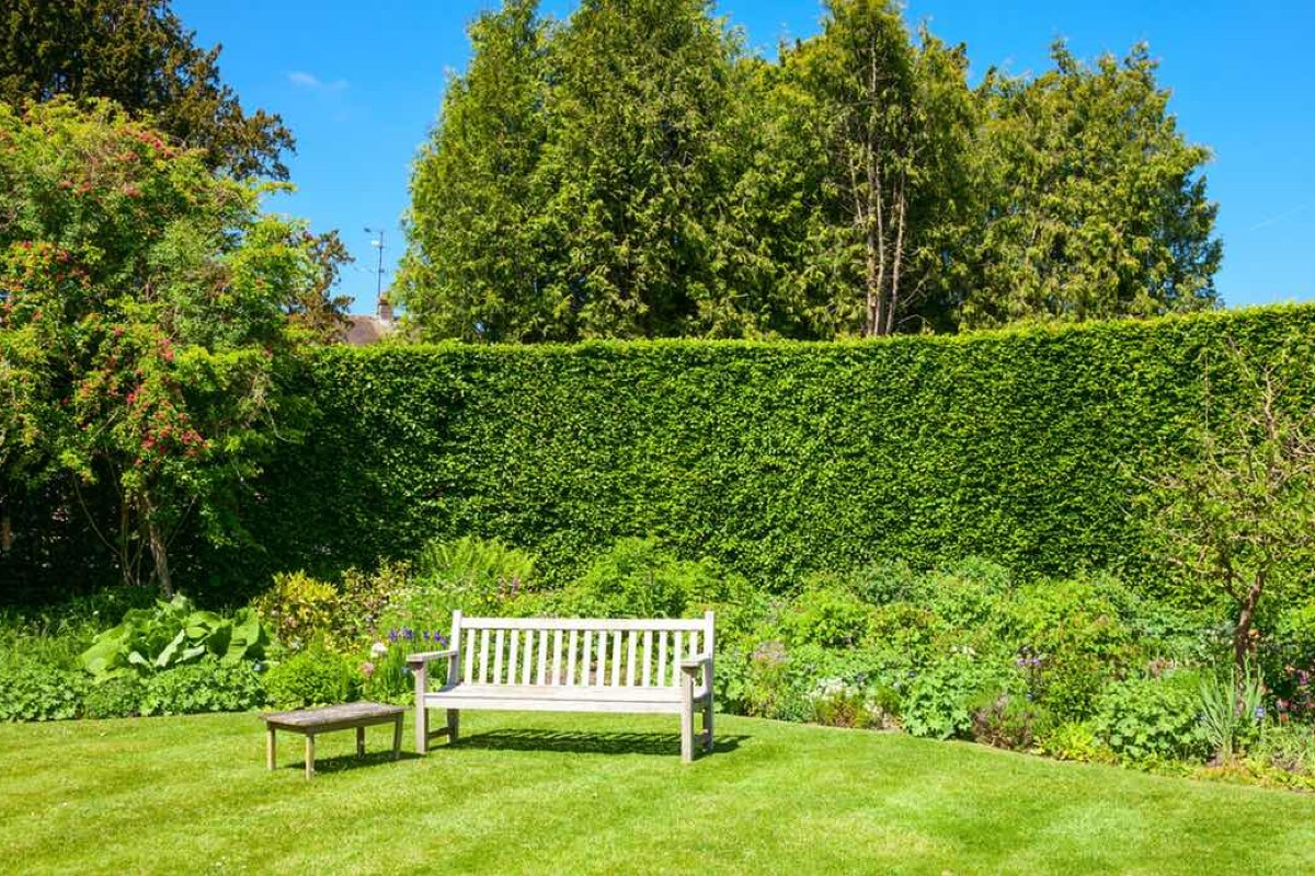 How to choose the right hedge for your garden 1