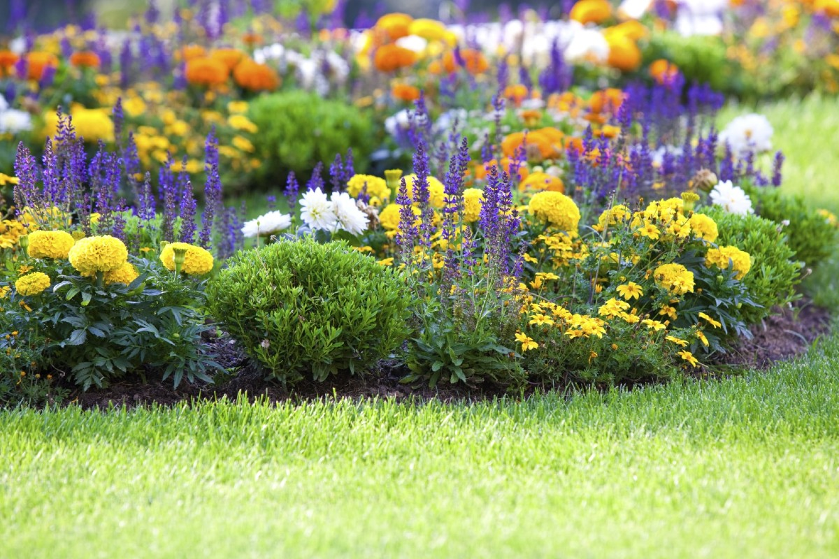 How to place plants in the garden 5