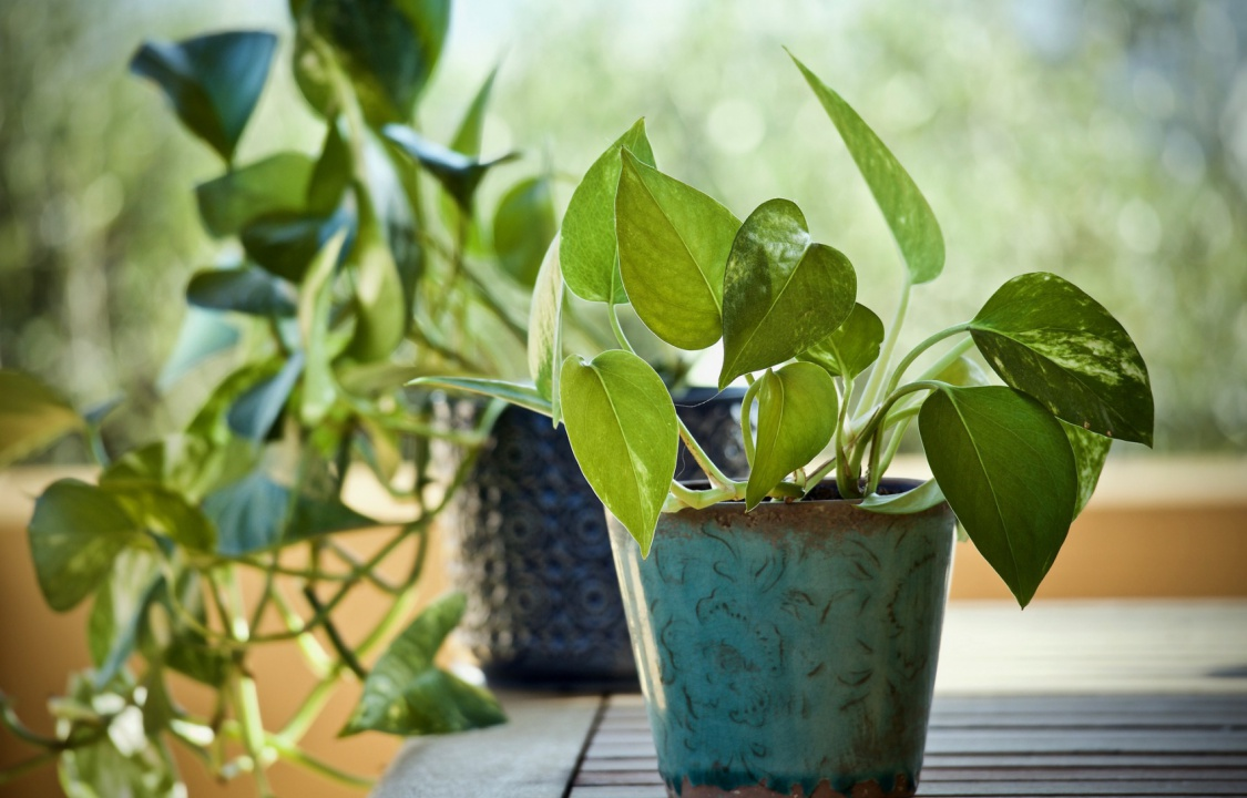 mistakes-to-avoid-house-plants-4