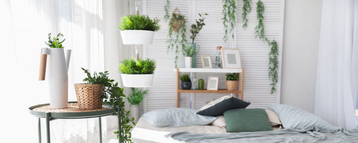 mistakes-to-avoid-house-plants-3