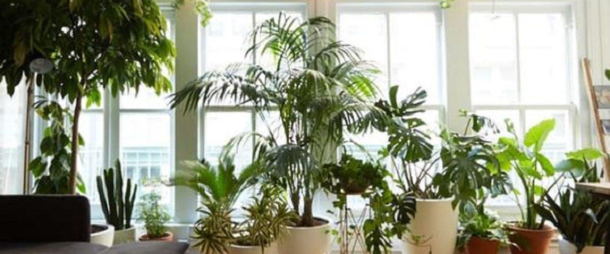 errori-da-evitare-piante-casa-1