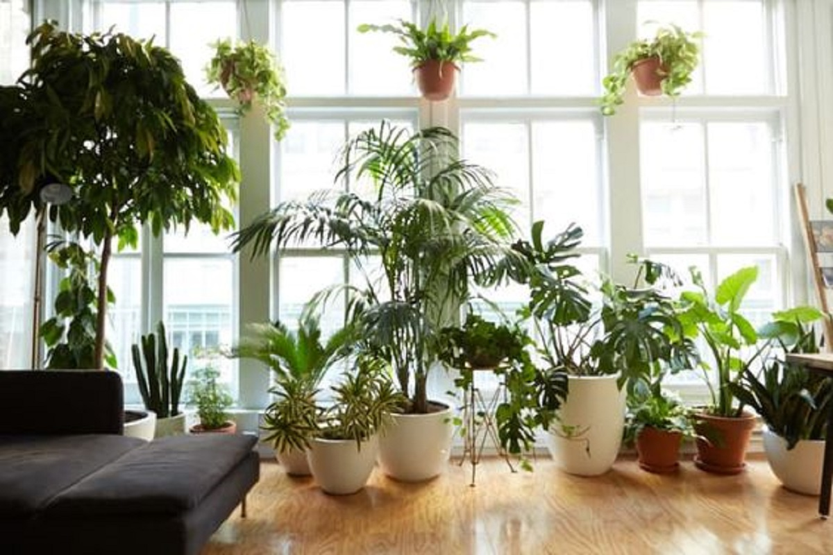 mistakes-to-avoid-house-plants-1