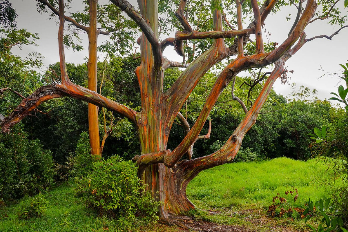 Evergreen garden trees 3
