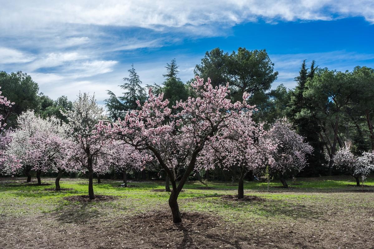 Fruit trees for the garden 5
