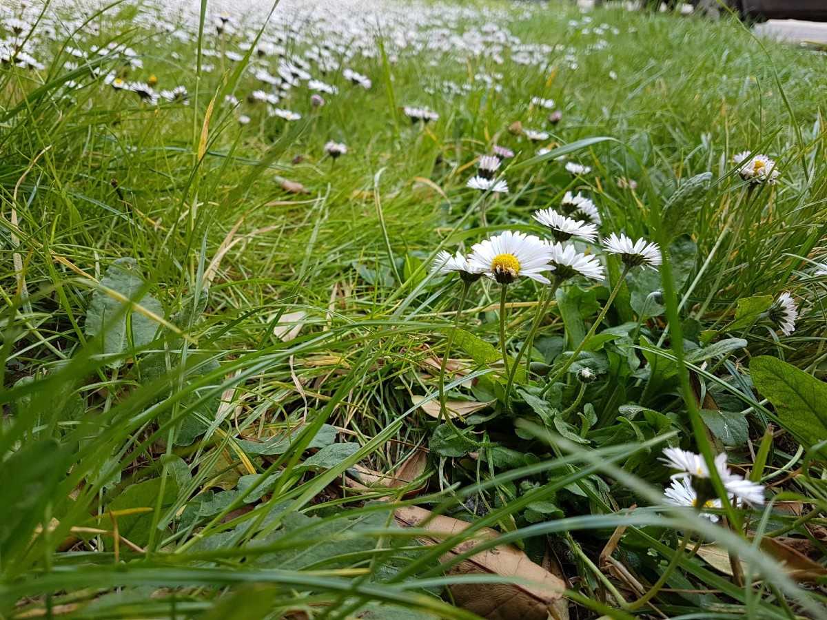 Flowering meadow_ how and when to sow 2