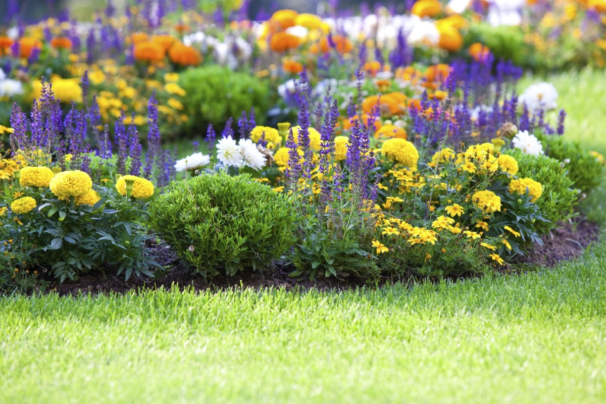 Flowering meadow_ how and when to sow 1