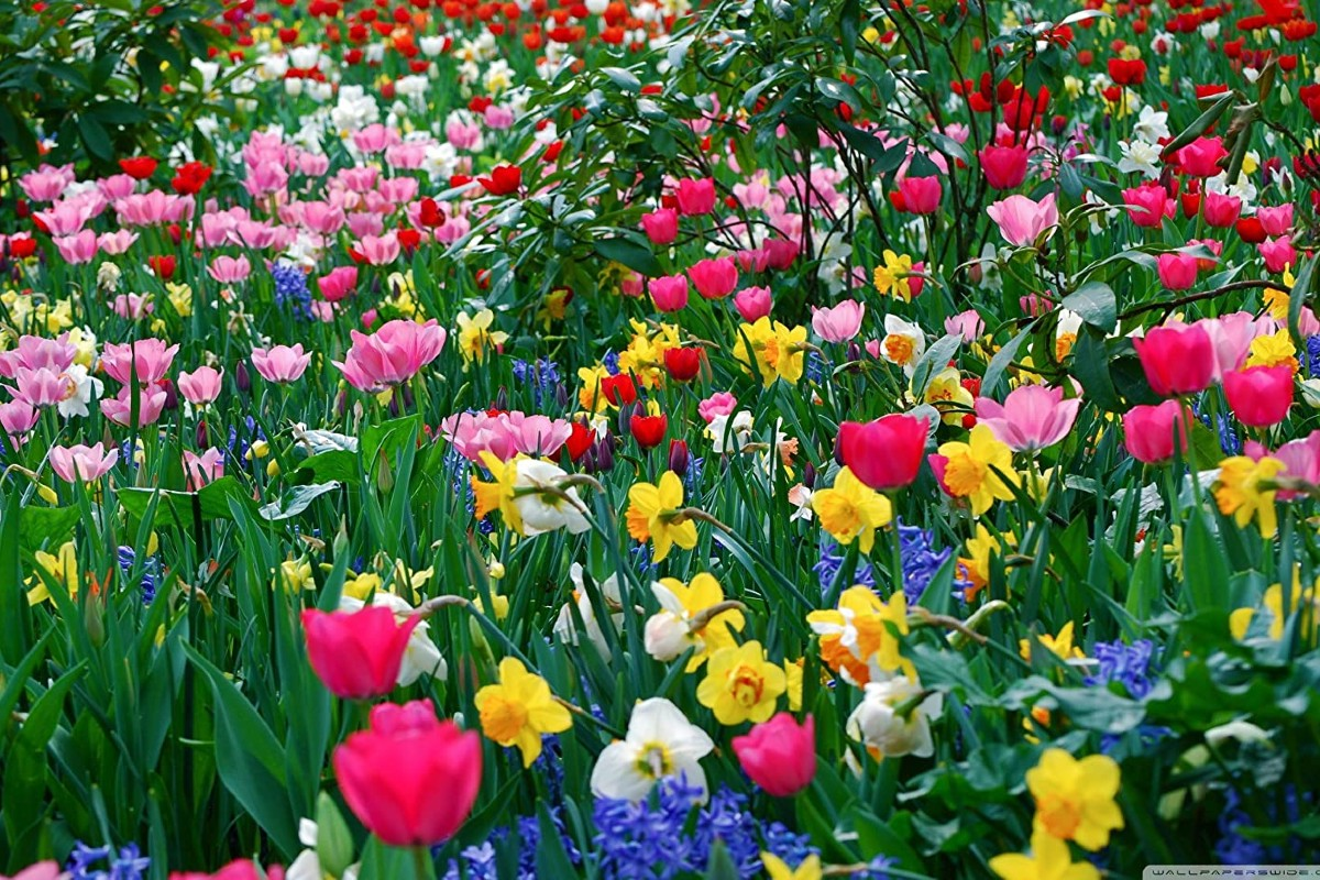 Flowering meadow_ how and when to sow 5