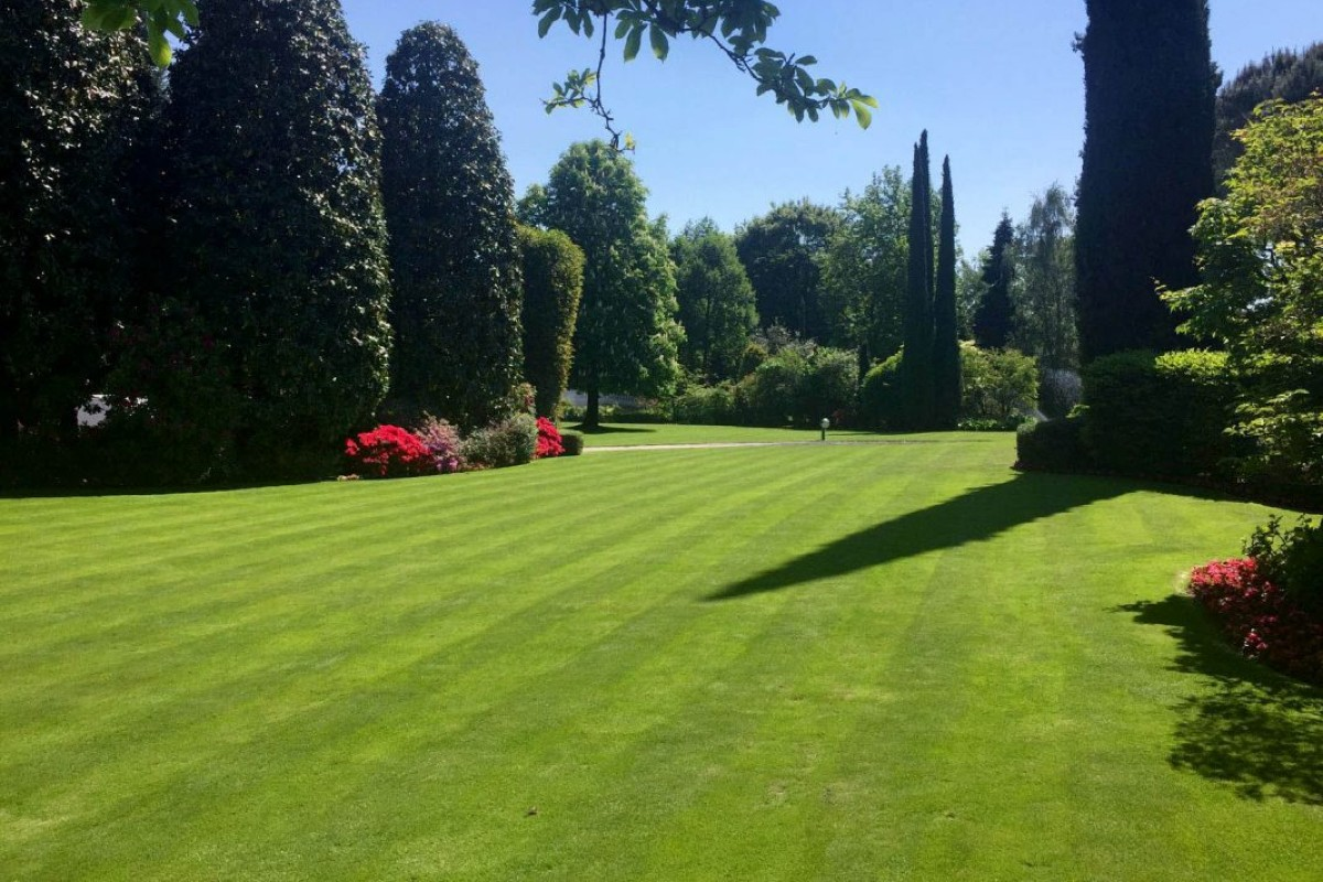 Lawn how and when to sow 3