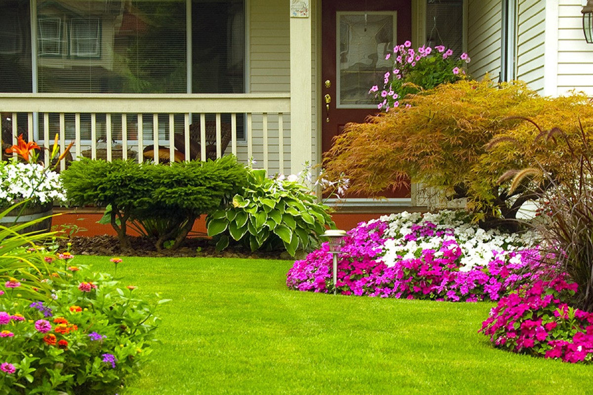 Lawn how and when to sow 4