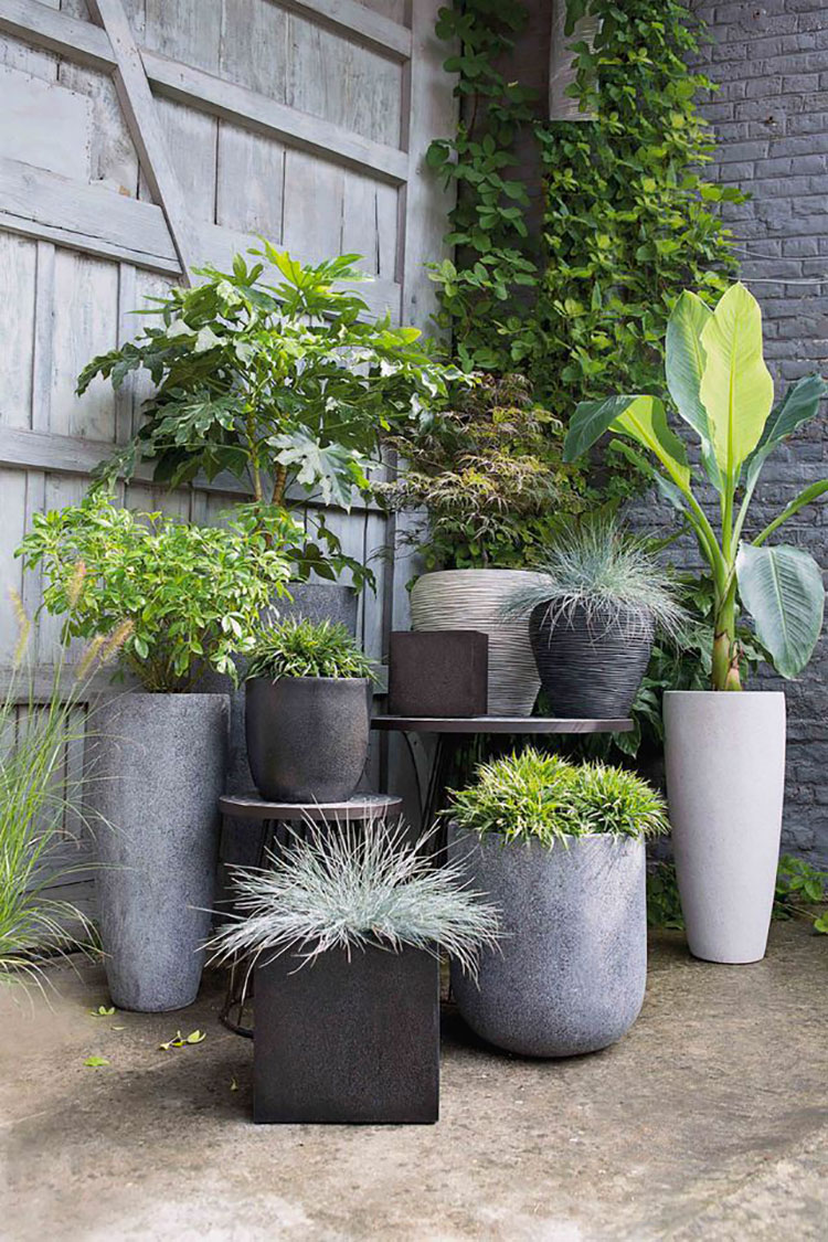 Ideas for embellishing a terrace with plants and flowers n.3