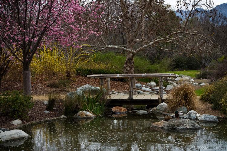 Japanese style zen garden photo # 12