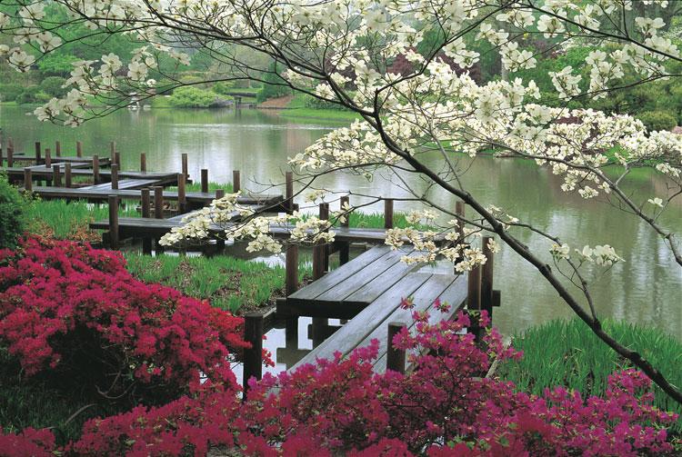 Japanese style zen garden photo # 08