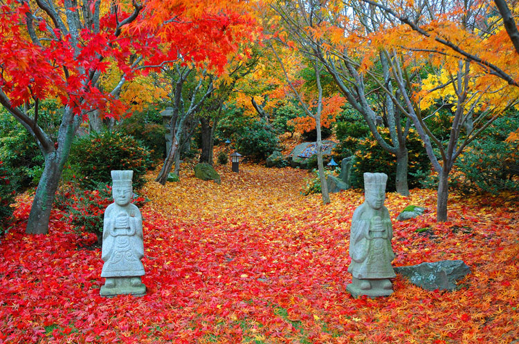 Japanese style zen garden photo # 20