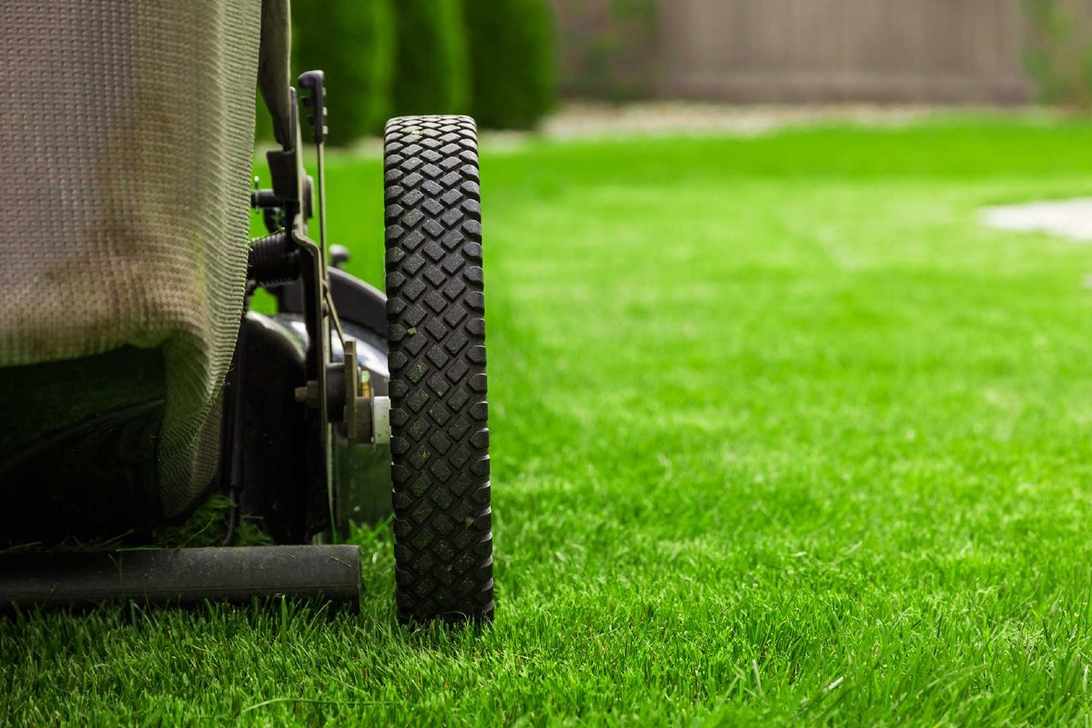 Ornamental lawn_ types, how and when to sow 2