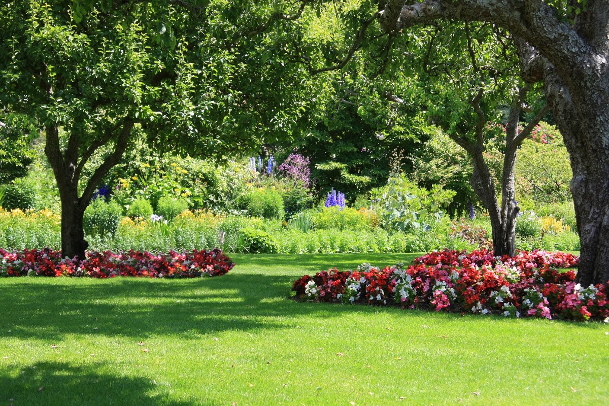 Ornamental lawn_ types, how and when to sow 4