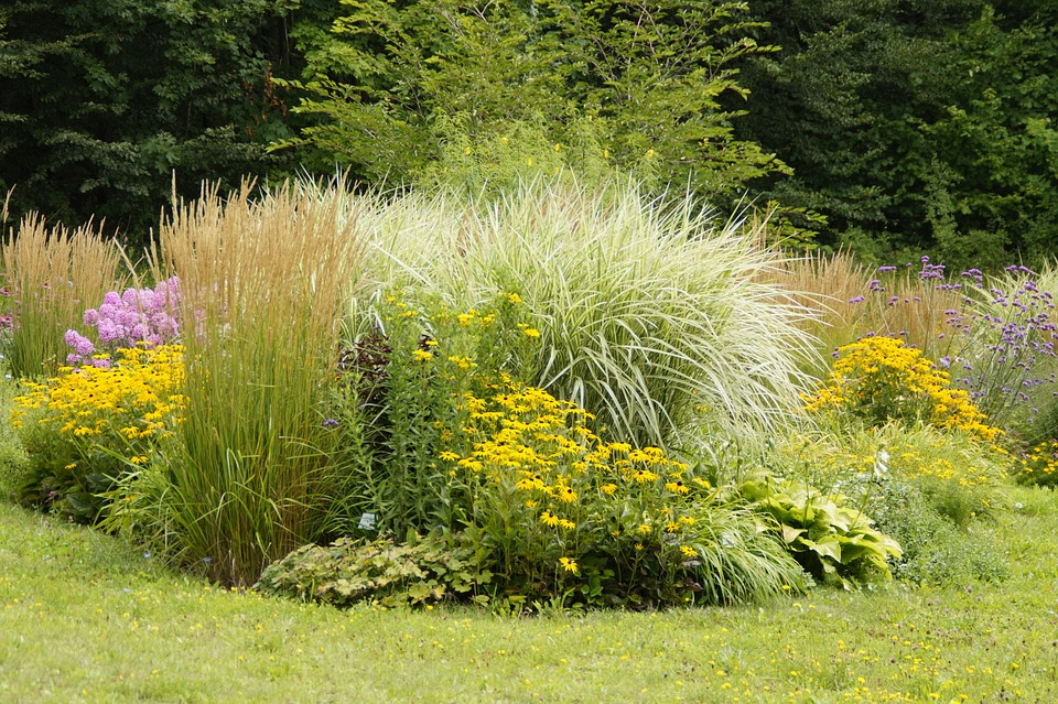 Carex-Sedge-Cultivation