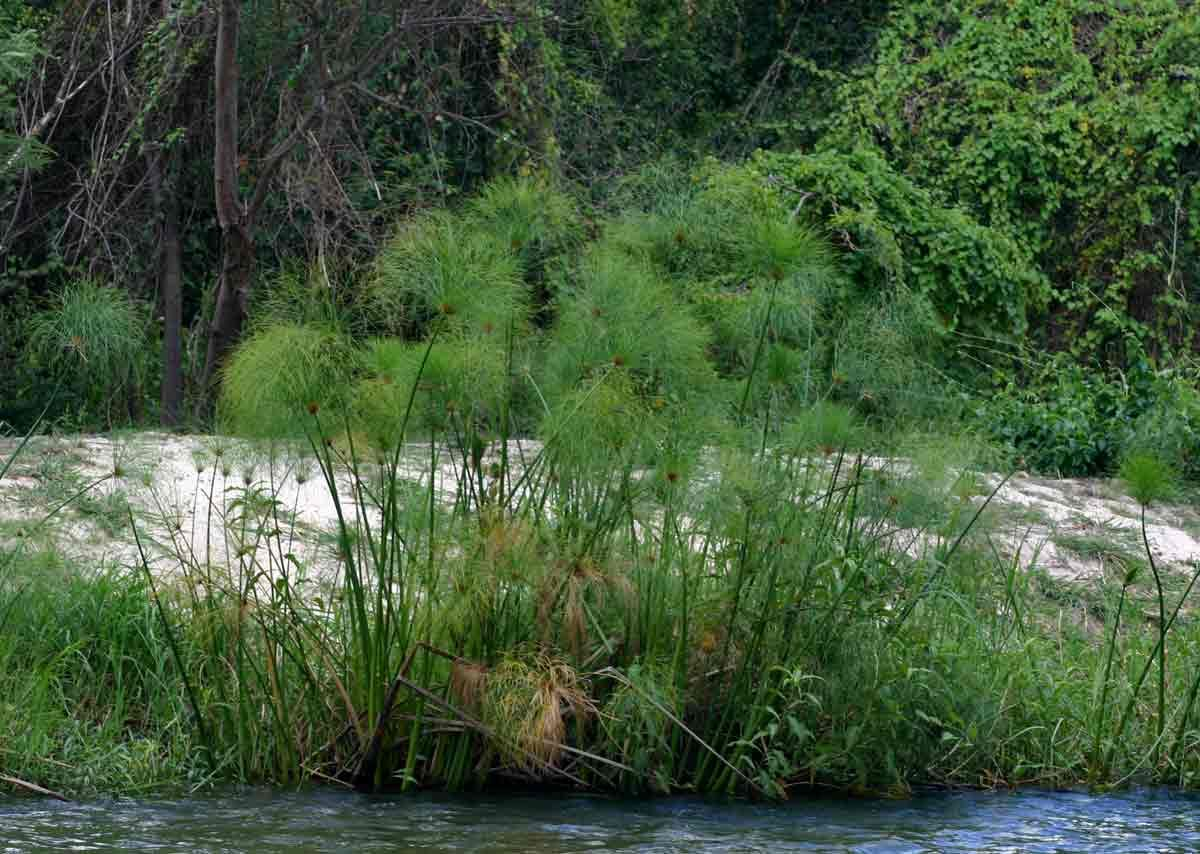 What are aquatic plants how to care for them 2