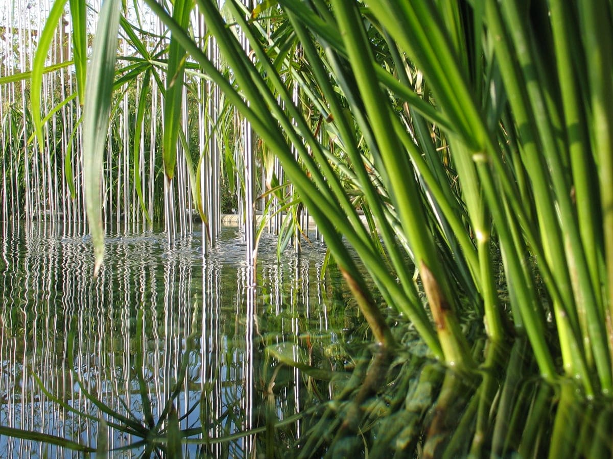Aquatic plants which are how to care for them 5