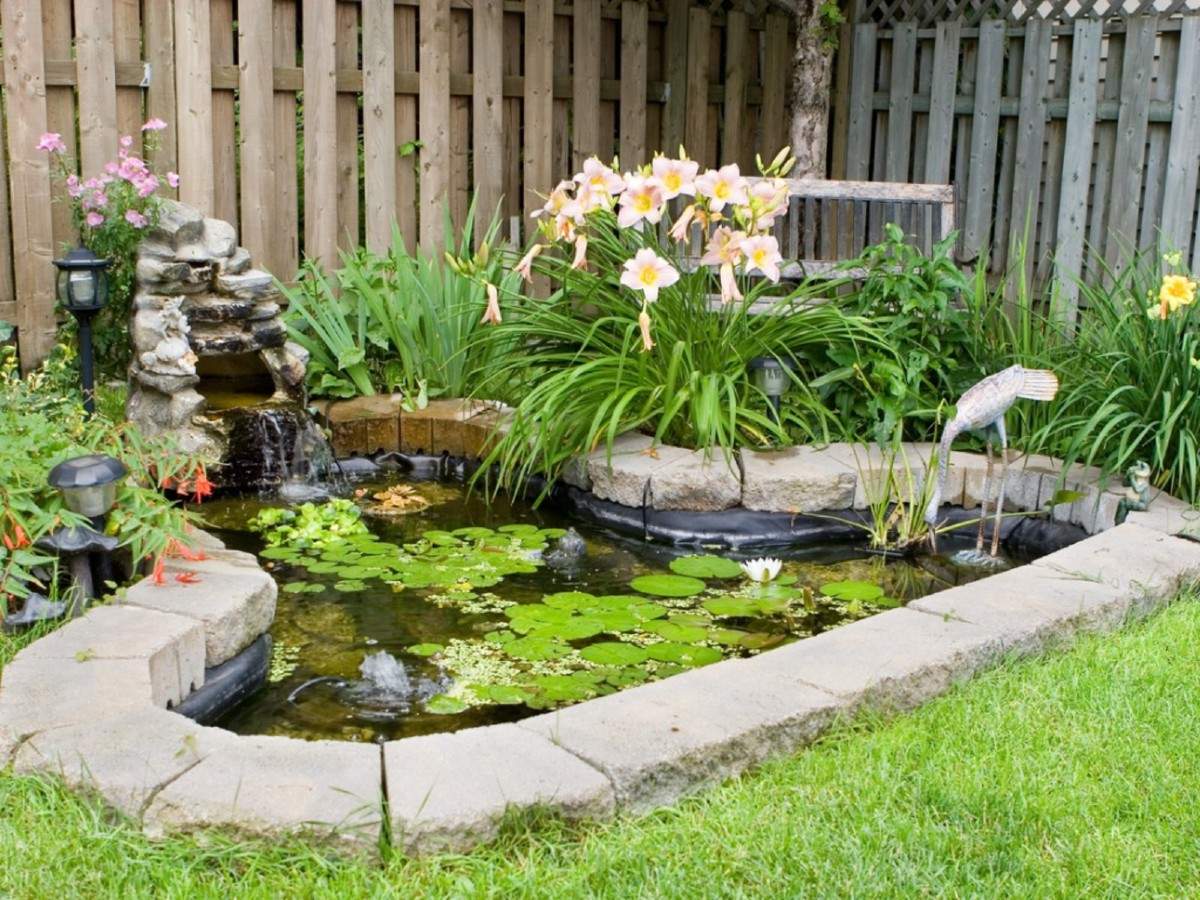 Aquatic plants which are how to care for them 6