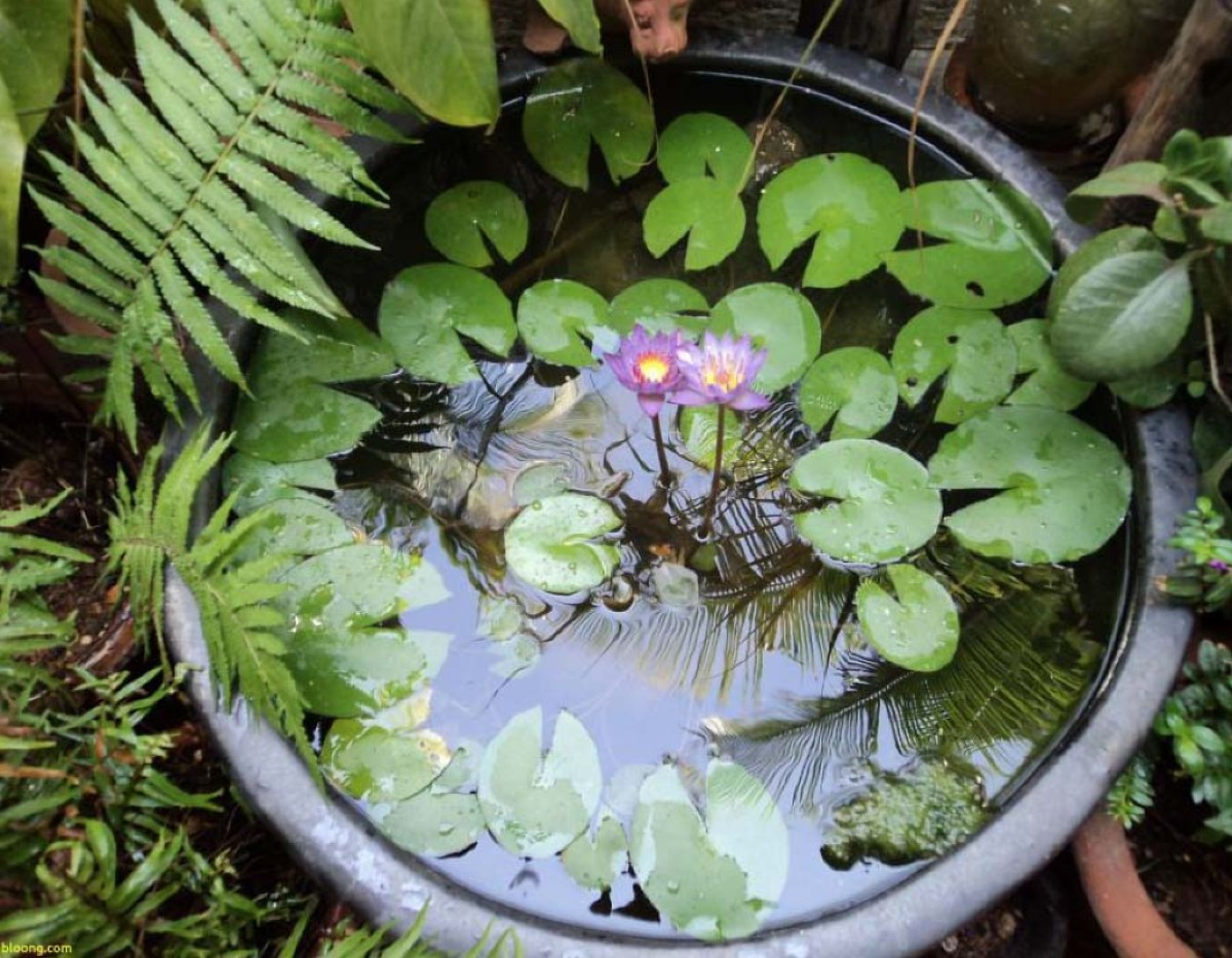 Aquatic plants which are how to care for them 4