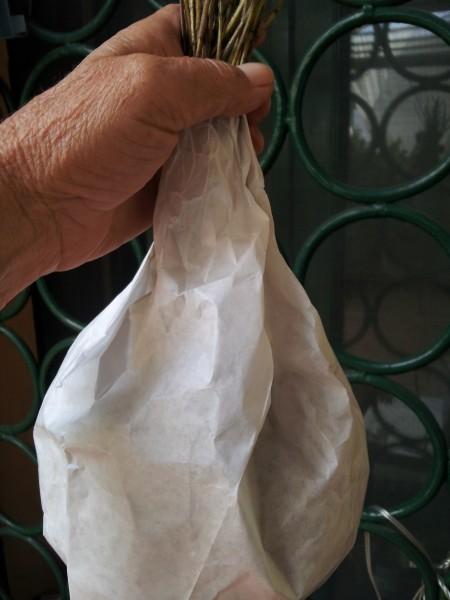 oregano-drying