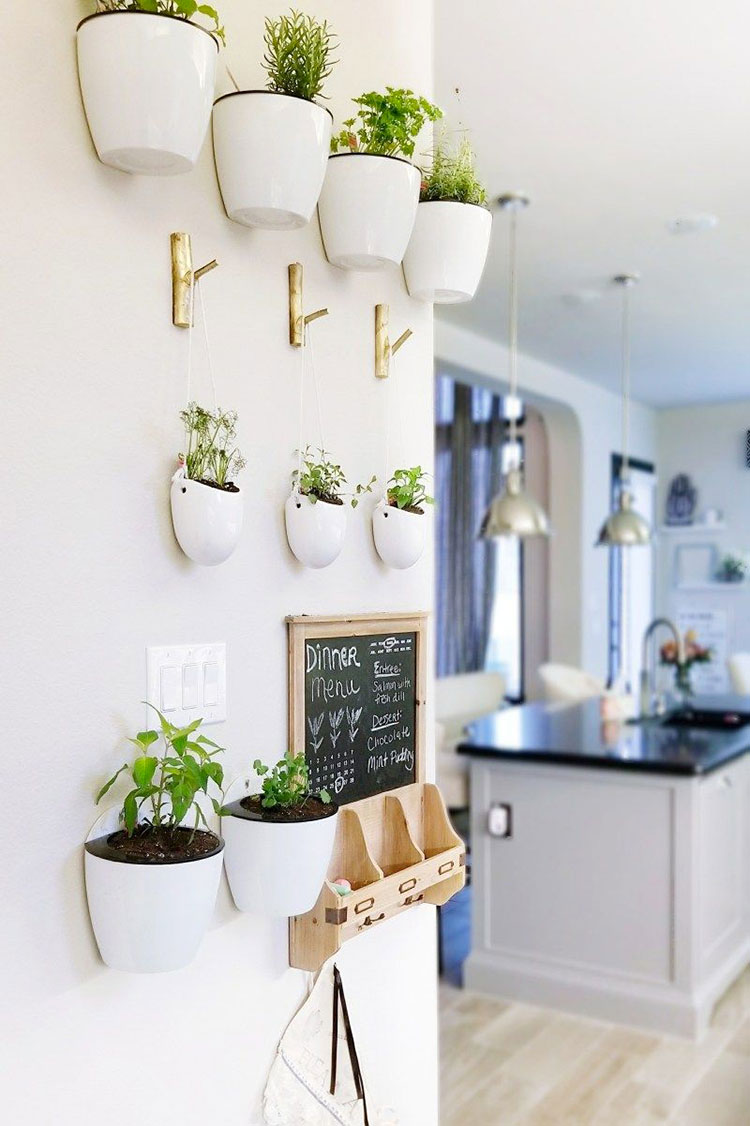 Ideas for decorating the kitchen with plants n.03