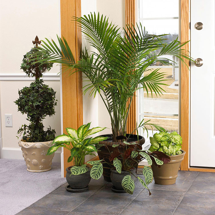 Ideas for decorating the entrance with plants n.02
