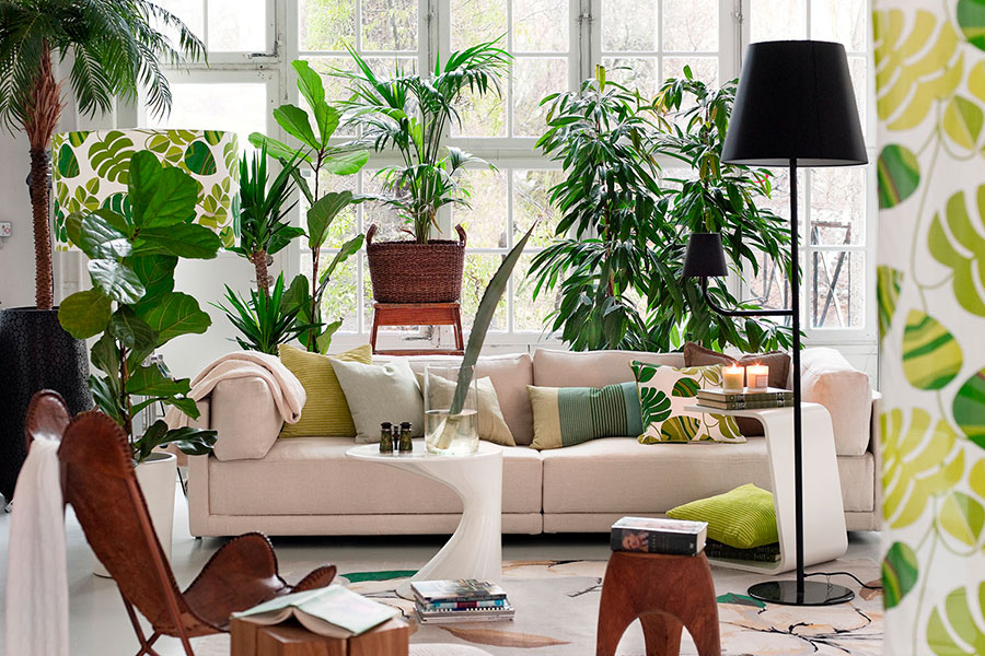 How to decorate the living room with indoor plants