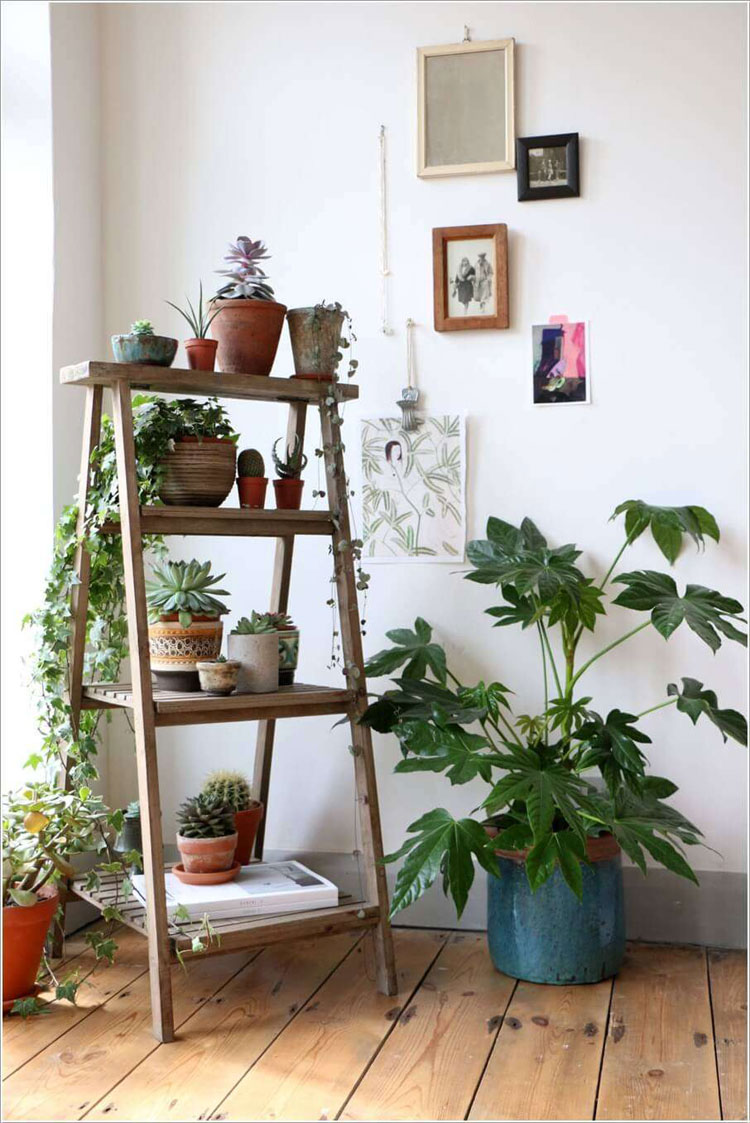 Rustic ladder to place plants