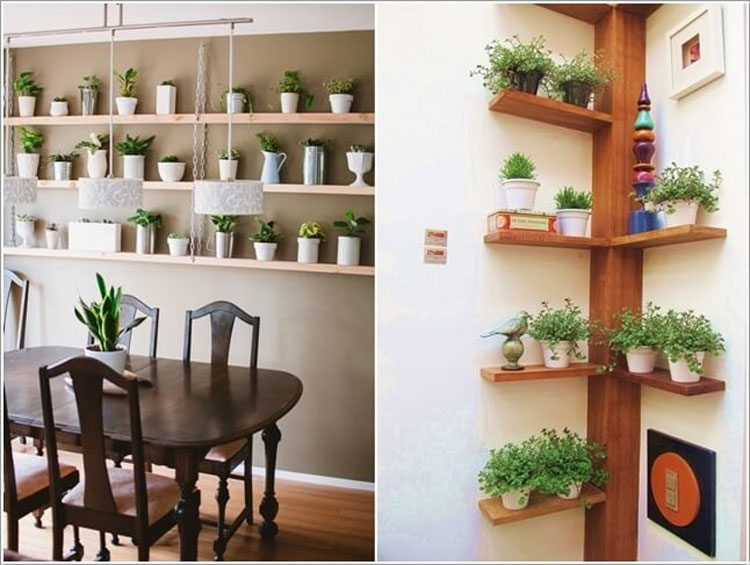 Furnish with plants placed on the shelves