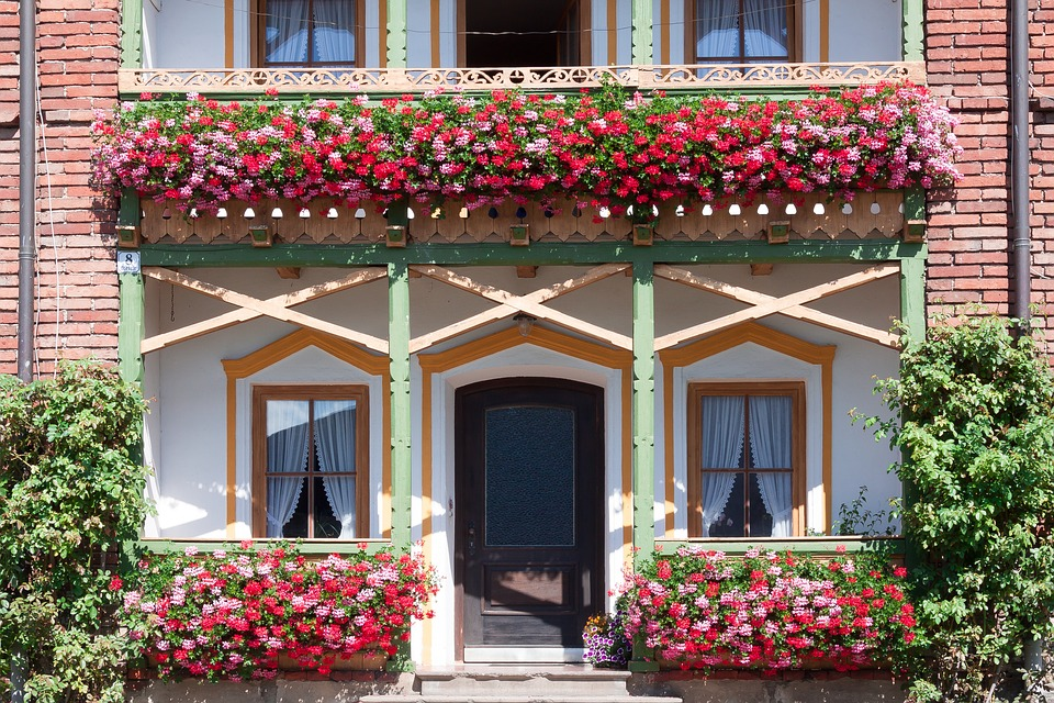 Parisian-geraniums-uses
