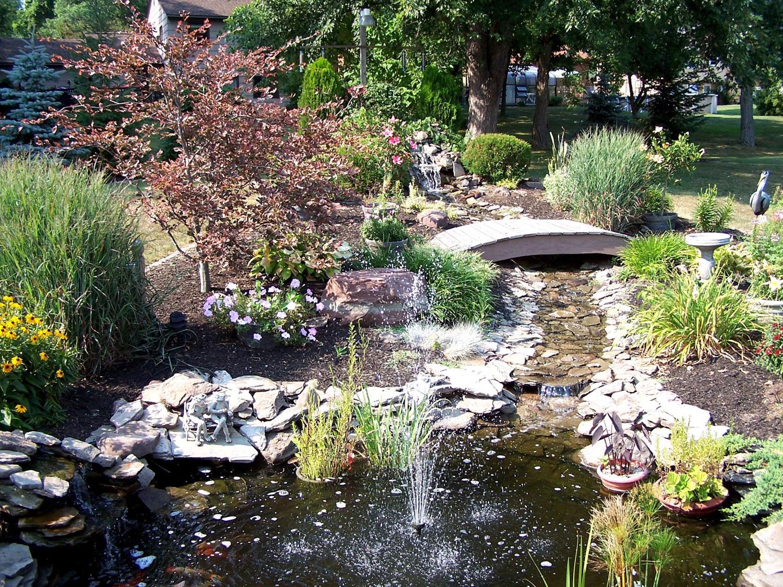 Garden pond photo # 14
