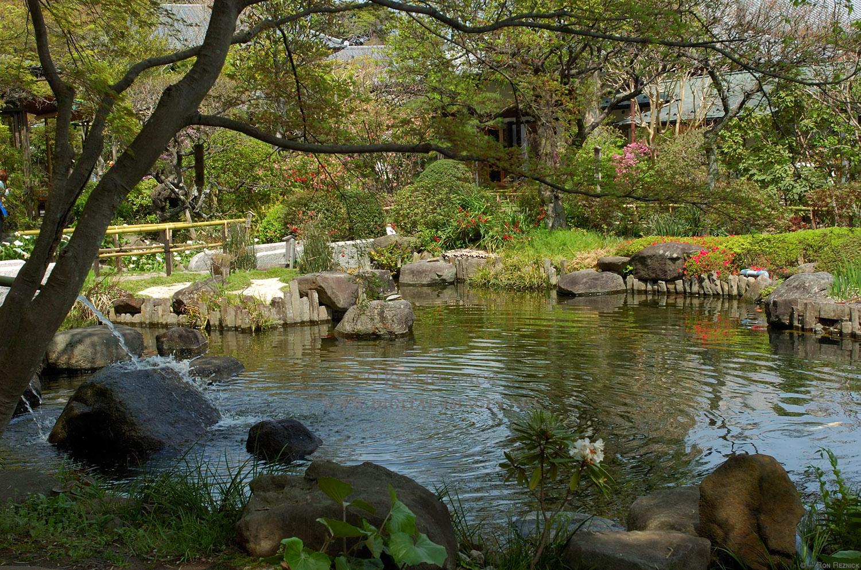 Photo of the garden pond 38