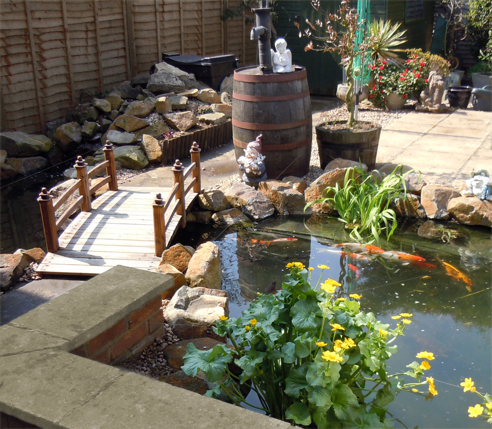 Photo of the garden pond # 28