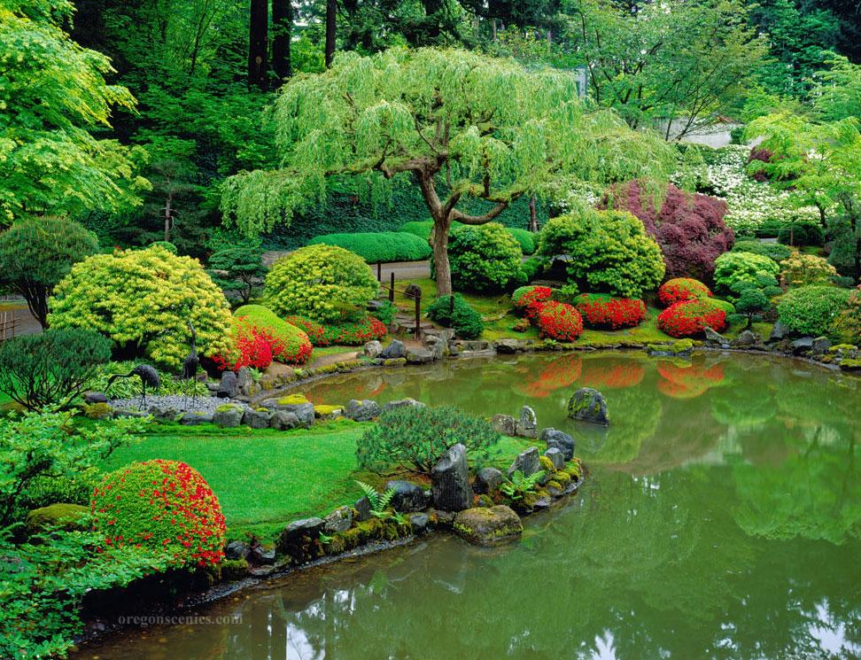 Garden pond photo # 16