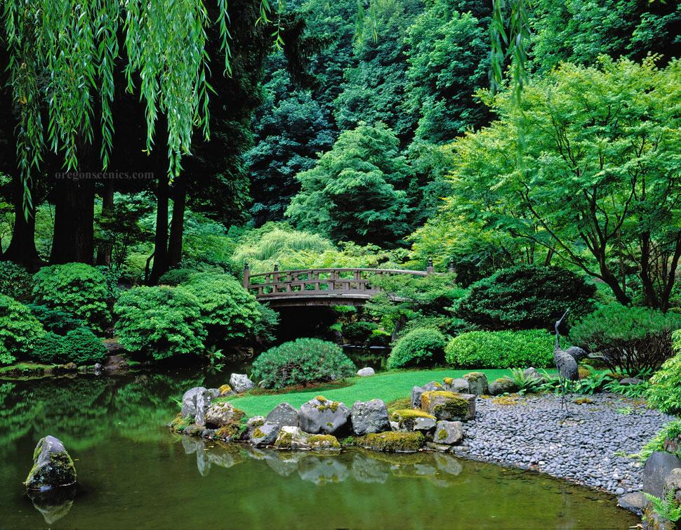 Garden pond photo # 17