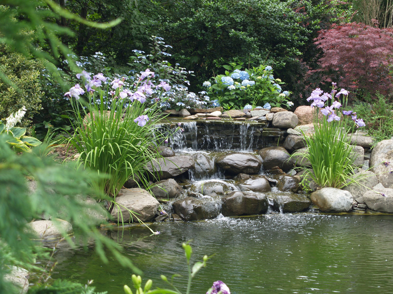 Photo of the garden pond n.02