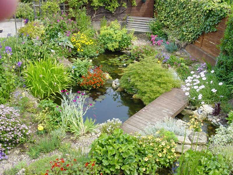 Photo of the garden pond 32